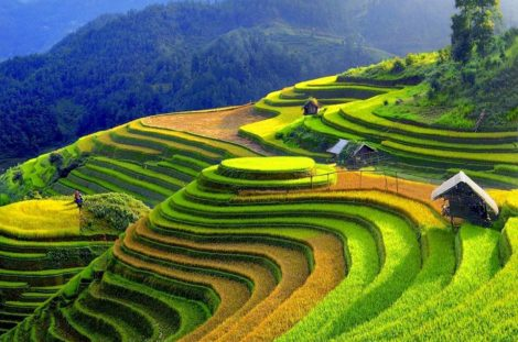 Trek Hoang Su Phi Terraced Fields & Homestay 4 days