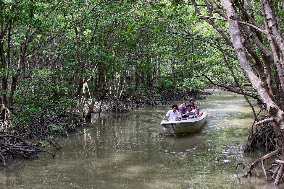 Mangrove forest - Can Gio